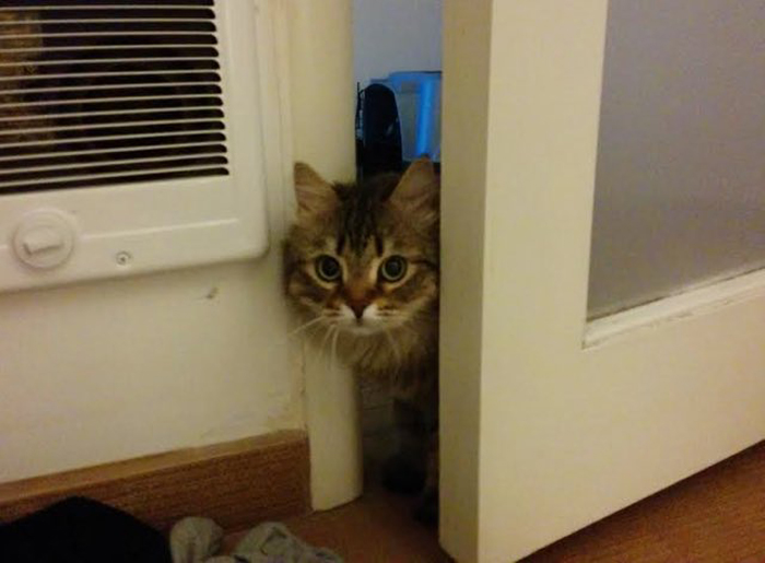 Cat_peeping_past_door
