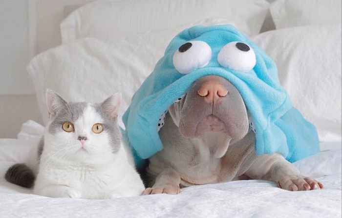 Cat_with_dog_wearing_costume
