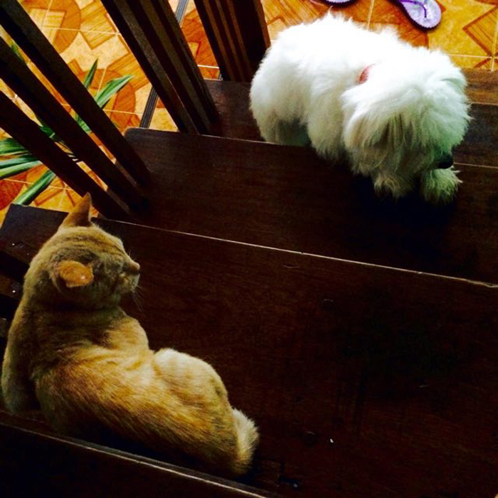 Dog_and_cat_on_stairs
