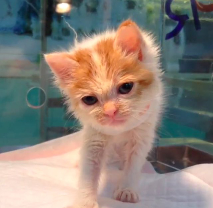 KItten_at_shelter