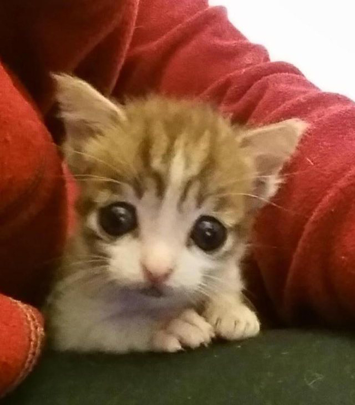 KItten_with_sad_eyes