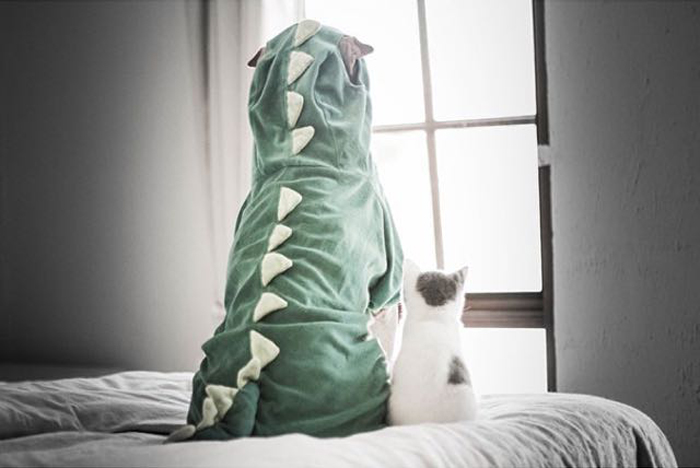 Kitten_with_dinosaur