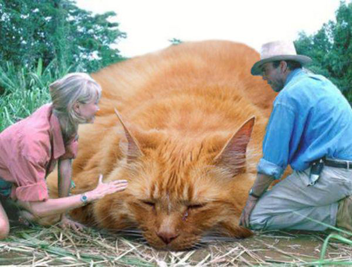 People_with_huge_cat