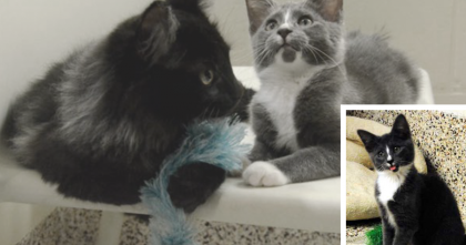 Blind Kitten Became Friends With A Fluffy Black Cat For A Special Reason… AMAZING.