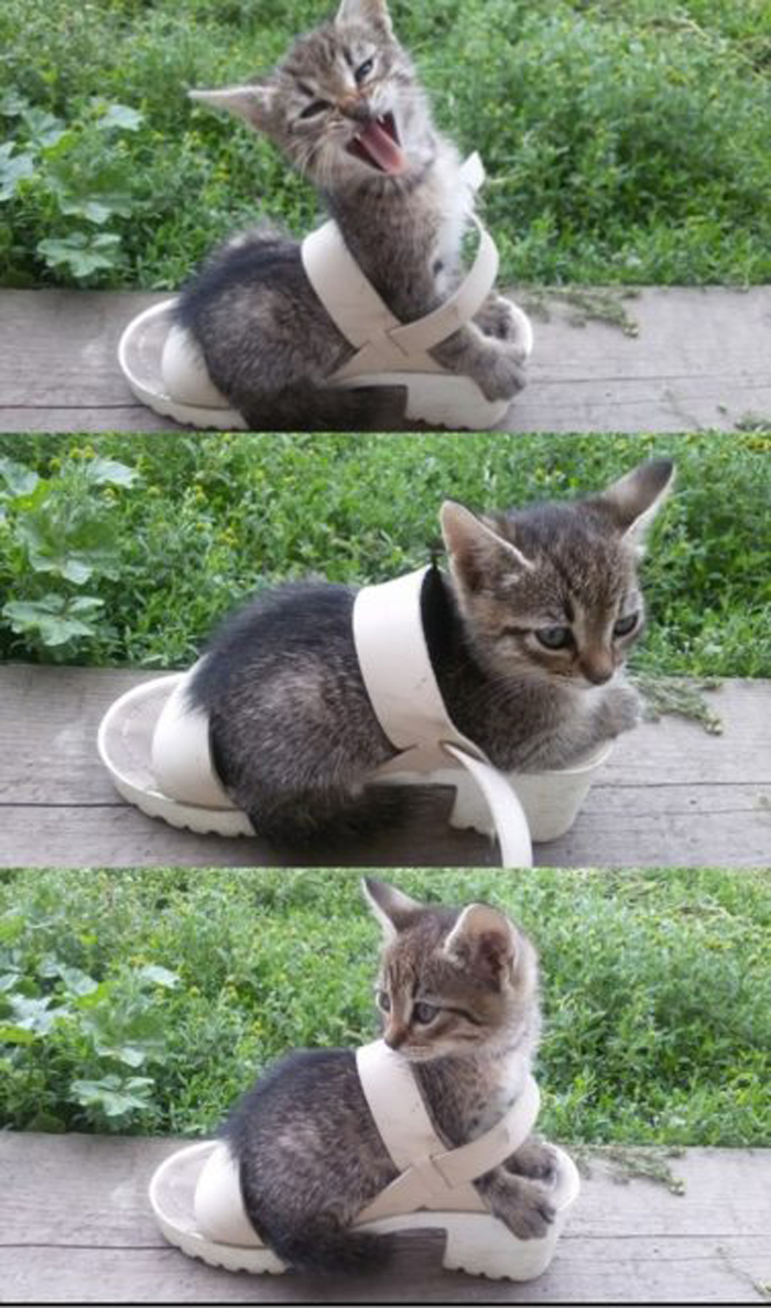 cat_in_shoe