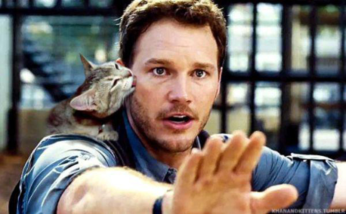 cat_licks_chris_pratt