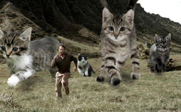 chased_by_cats
