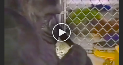 He Lost His Best Friend, But What Happened Next Will Bring Tears To Your Eyes… WOW.