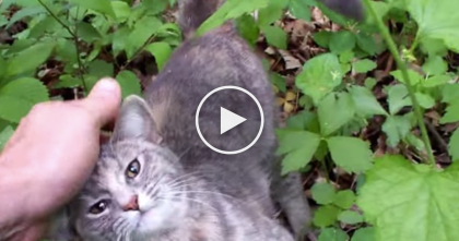 He Went For A Walk, Then All Of A Sudden…I Can't Believe What He Found, WATCH.