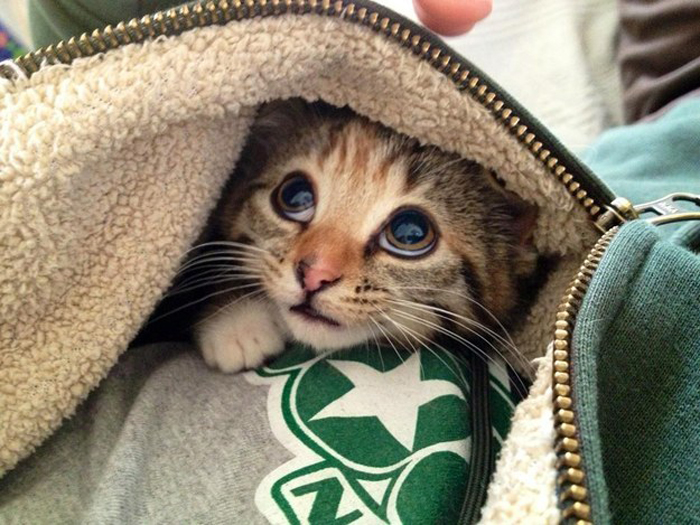 kitten_inside_jacket