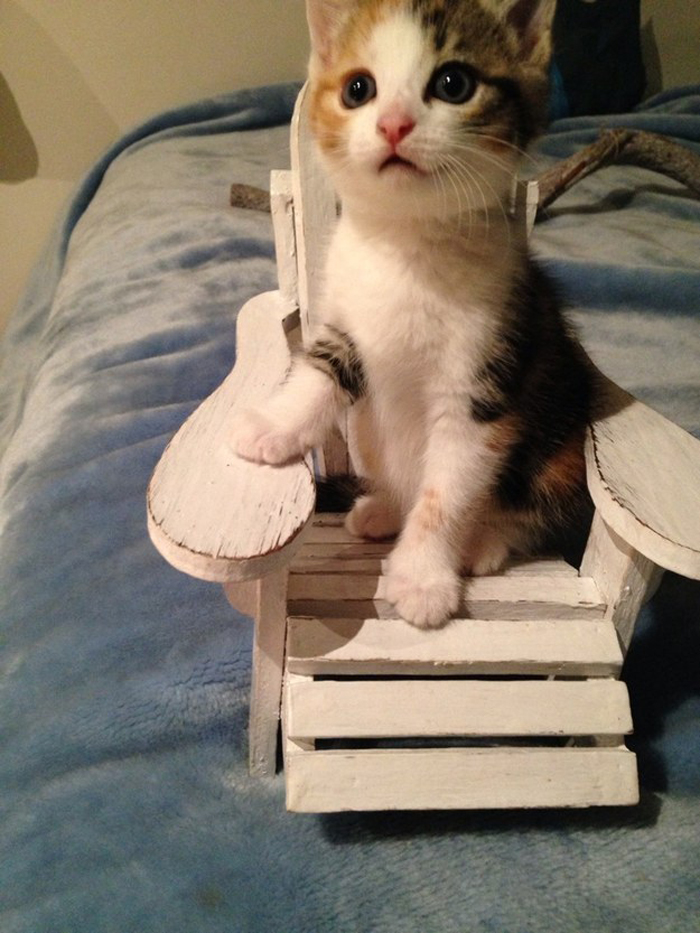 kitten_on_chair
