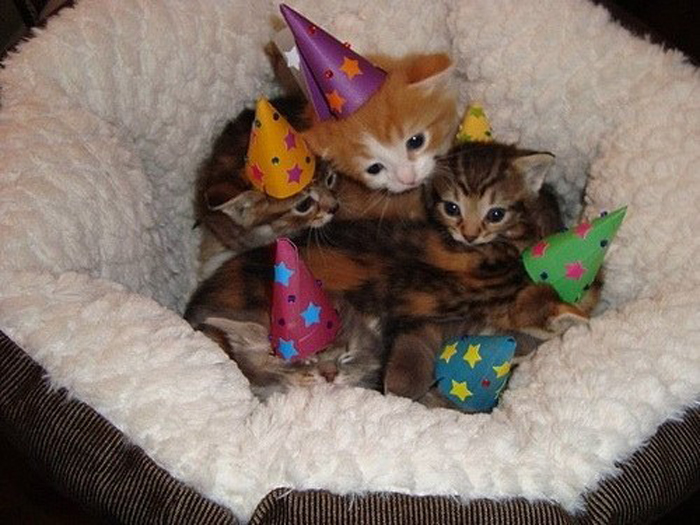 kitten_party_hats