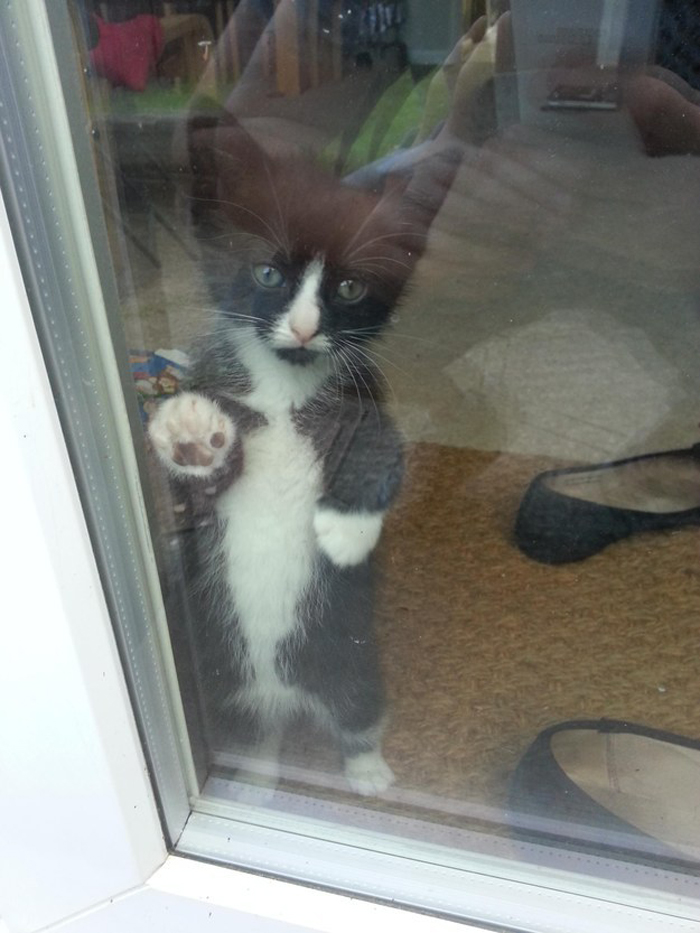 kitten_peers_through_window