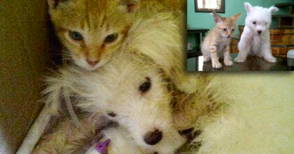 No One Believed Little Pup Would Survive, But What This Tiny Fur Ball Did Next… I'll Never Forget!