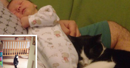 Pregnant woman decided to rescue a stray kitty… AND you've gotta see the results… Awwwww!!
