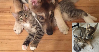 They Let This Puppy Choose Which Kitten To Adopt…When You See The Results?? AMAZING.