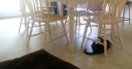 They Saw Their Cat Under The Table, But When He Started Doing THIS… They HAD To Record It