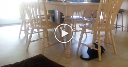 They Saw Their Cat Under The Table, But When He Started Doing This… OMG…