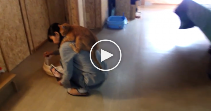 When This Kitty Discovers Piggy Back Rides, He'll Never Let Go…SOO Cute, Just Watch.