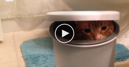 This Cat Has Found The Perfect Hiding Spot… Just Wait Till You See It, LOL…