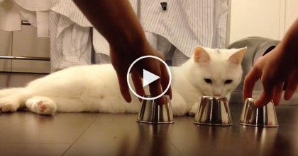 This Kitty Learns A New Game, But When You See What He Does… UNBELIEVABLE.