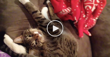 This Cat Sleeps In The Weirdest Way EVER, But It's Hilarious… Just Watch