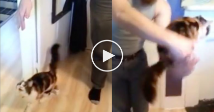 This Cat Won't Eat Breakfast Until She's Does THIS…Wow, How Can She Do That?!