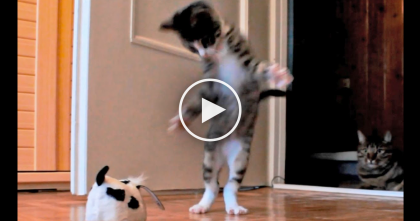This Kitten Is A Basket Case, Goes Bonkers With Just About Everything… Oh, GOODNESS.