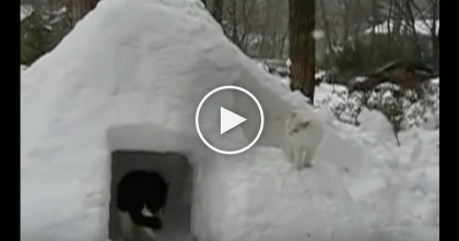 This Man Builds A Giant Snow Igloo For His Cats…You've Got To See Their Reaction! WATCH.