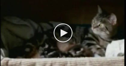 Orphaned Baby Red Panda Was Left All Alone…But When Momma Cat Noticed… AMAZING.