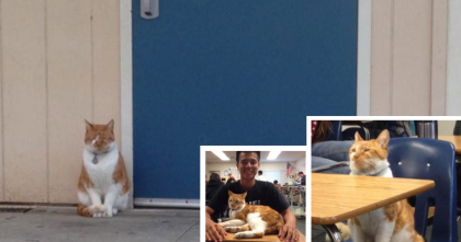 He Comes To Class EVERY Day, Gets 'A' Grades For Being The Cutest Classmate EVER…