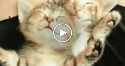 Adorable Kittens Find Their Way Into Owners Lap, But Just Take A Closer Look… Awwww!!