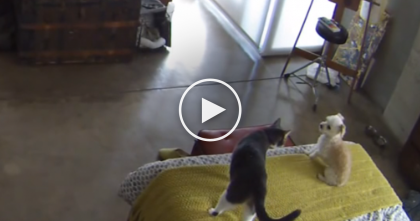 Barking Dog Refuses To Be Quiet, But When Kitty Hears, You've Got To See His Reaction…