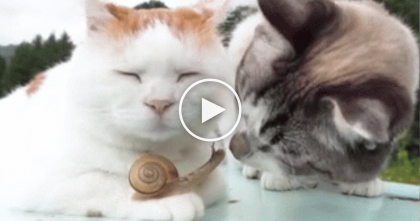 Kitty Makes Friends With Tiny Snail, Keeps Nuzzling And Doesn't Even Care At All… WATCH.