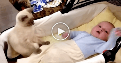 Kitty Notices Baby Needs To Calm Down, But What He Does Next… Just PRICELESS.