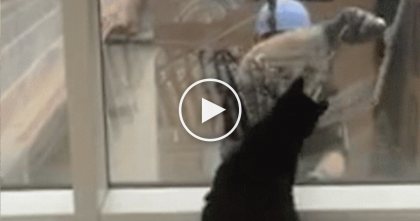 Kitty Notices His Favorite Window Washer, Then The Cutest Thing Happens… Awwww!!