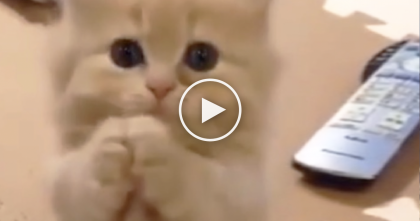This Will Be The Cutest 15 Seconds Of Your Day, I Just Can't Resist It… ADORABLE.