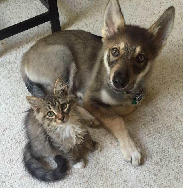 1-puppy-chooses-kitten-at-shelter