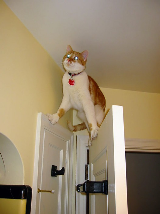 10-cats-that-instantly-regret