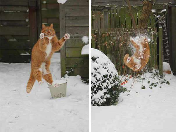 11-cats-that-instantly-regret