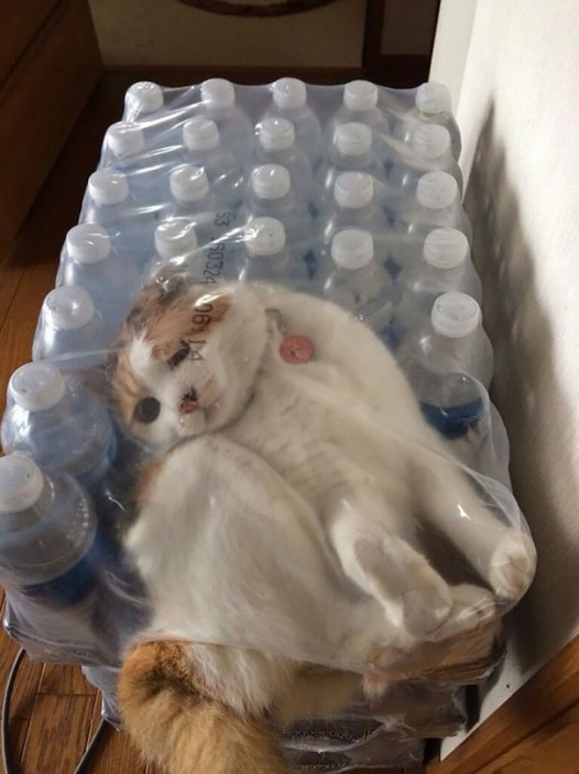 12-cats-that-instantly-regret
