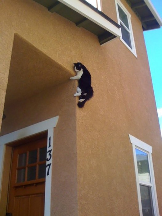 14-cats-that-instantly-regret