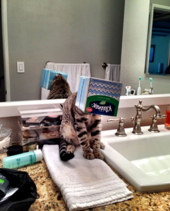 15-cats-that-instantly-regret