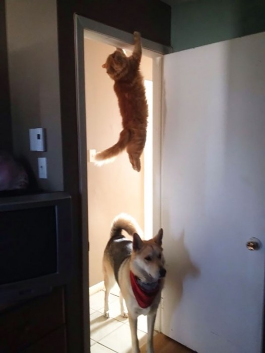 17-cats-that-instantly-regret