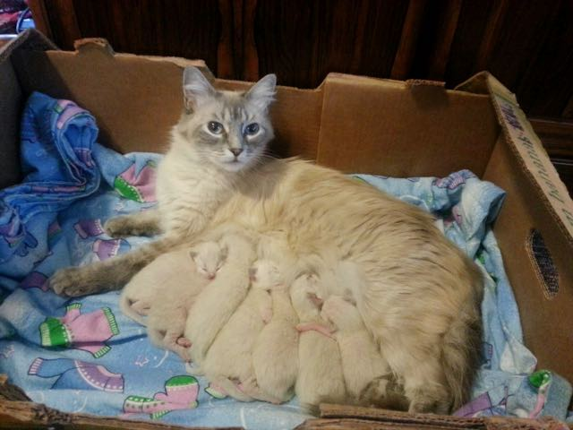 1_Proud_Momma_and_Kittens