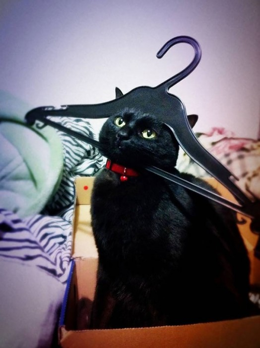 21-cats-that-instantly-regret