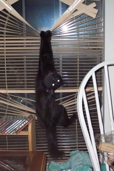 3-cats-that-instantly-regret