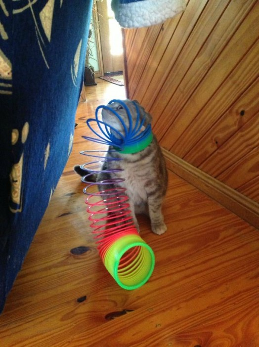 5-cats-that-instantly-regret