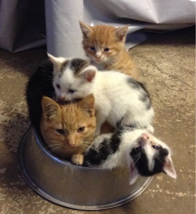 6-cat-mom-adopts-kitten