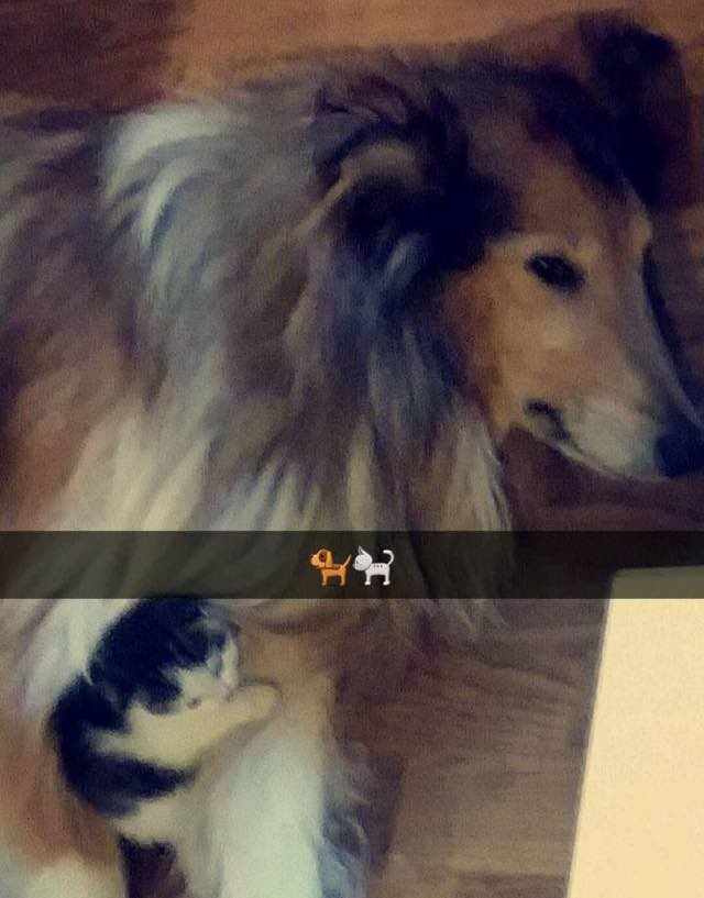 6_Dog_and_Cat